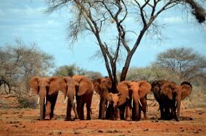 Eine Herde Dickhäuter unter der heißen Sonne Afrikas